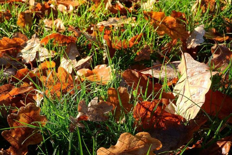 秋天早上跑步多长时间建议秋天这样跑步